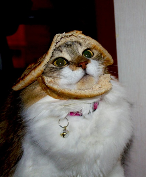 Ну чем не бутерброд?
