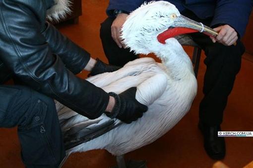 Теперь он будет жить в зоопарке. Фото: kerch.com.ua