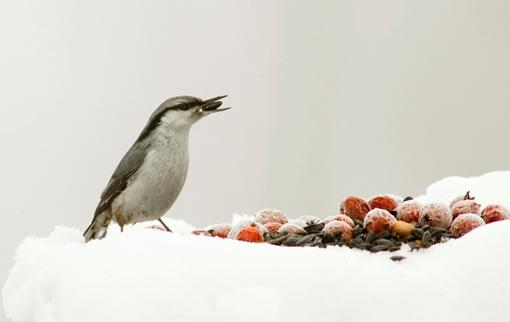 Все мелкие птицы будут с удовольствием клевать обыкновенные семечки