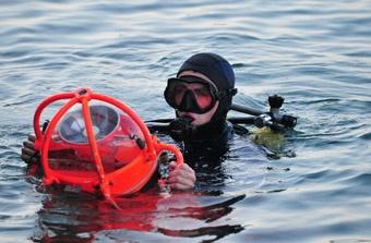 Дайверы увидели мертвых медуз