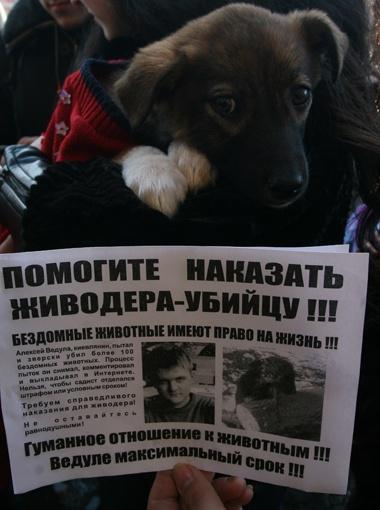 На митинге перед зданием суда зоозащитники сделали плакаты с фотографиями догхантера и убитых им щенков.