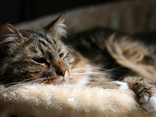 Рекламная кампания характеризует кота как кандидата независимого, гордого, энергичного, с уникальным жизненным опытом и умеренными взглядами. Фото: hankforsenate.com