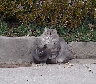 Коты любят супругу президента
