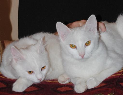 Близняшки Шайба и Флешка