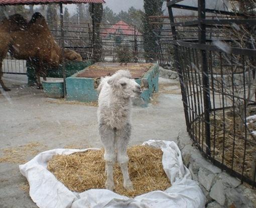 Малышку назвали Мартой в честь первого весеннего месяца Фото пресс-службы зоопарка