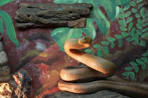 Потревоженные змеи встают в стойку
