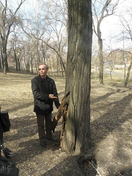 Кандидат биологических наук Вадим Манюк уверен, что многие больные деревья в парке, которые планируют спилить, вполне можно вылечить. Фото автора.