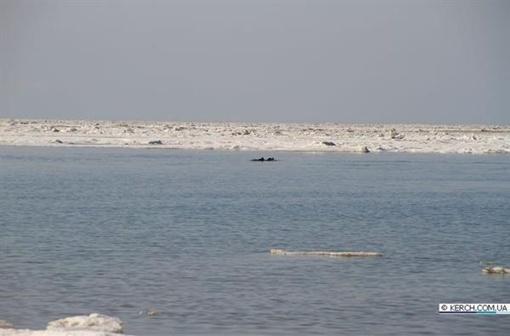 Дельфинов планируют вывозить на машинах. Фото: kerch.com.ua