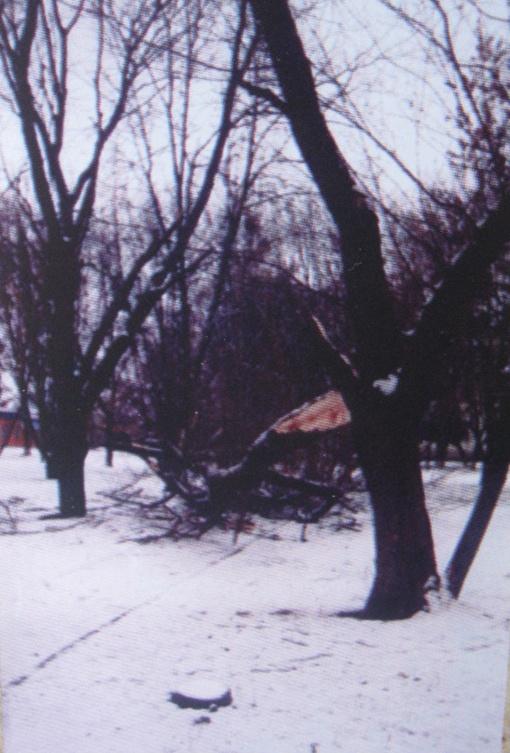 Снимок ветки после бури был сделан лет пять назад, но только недавно музейщики поняли, что она указывала место раскопок. Фото Ярослава ЕНКО.