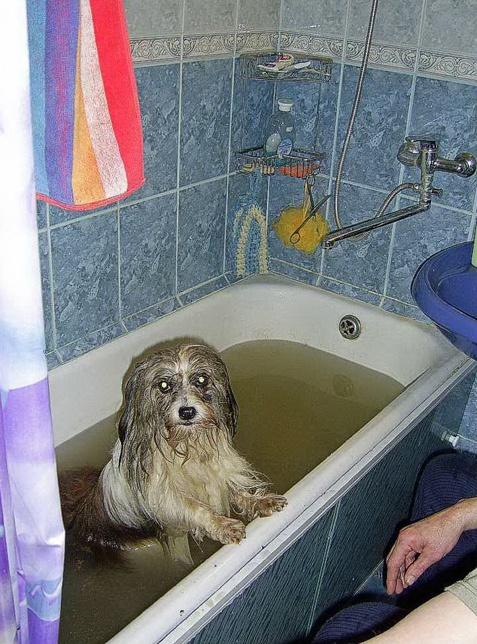 Накопили долги за воду - придется всей семьей в одной ванне купаться. Фото из архива