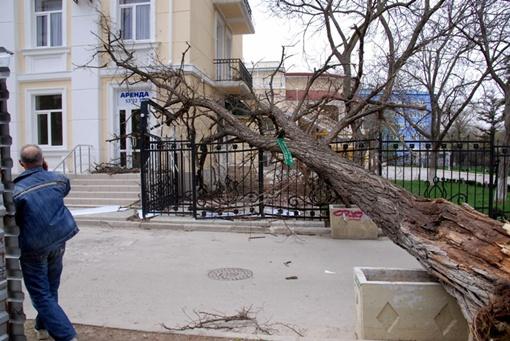 Одно из деревьев повалилось на забор гостиницы