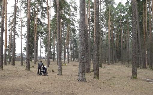 В Конаковском бору Олег выкопал себе могилу и попросил Аню убить его Фото: Алексей КОСОРУКОВ