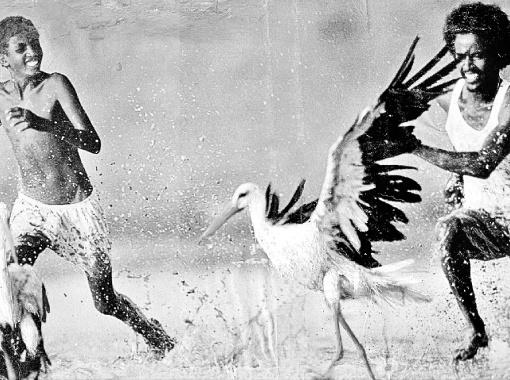 Охота на аистов в Судане.