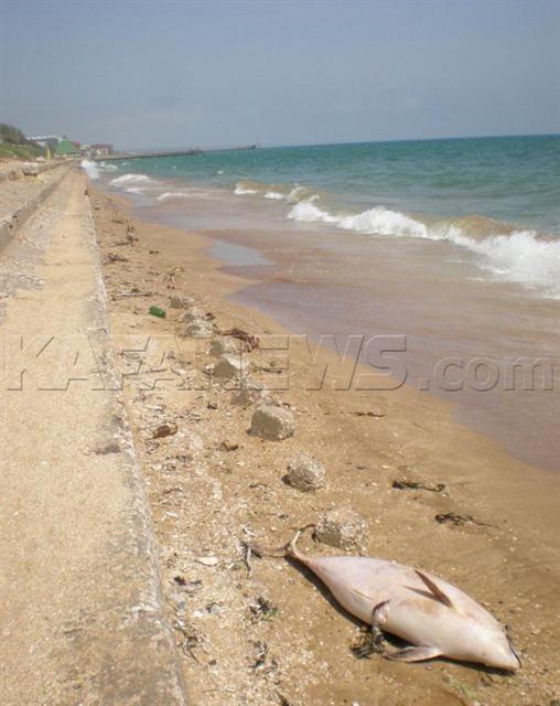 Эксперты считают, что во всем виноваты рыбаки. Фото