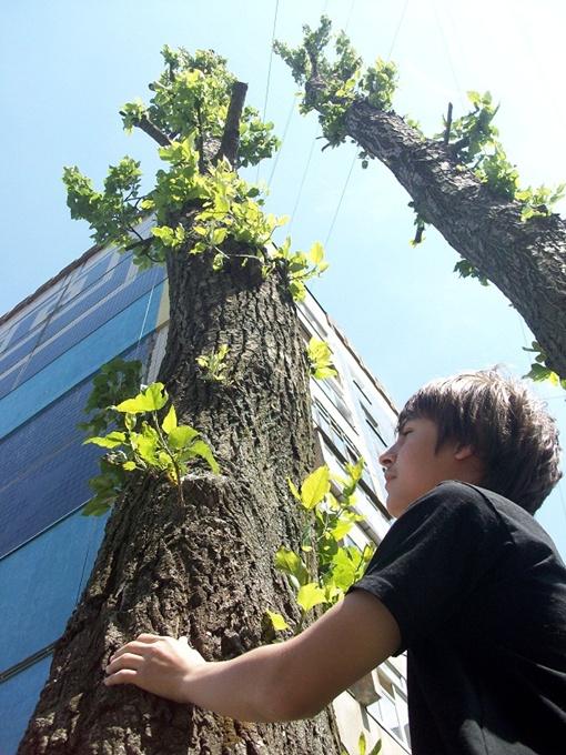Старые и больные деревья будут вырубать, а на их место высаживать те, которые не раздражают аллергиков. Фото из архива
