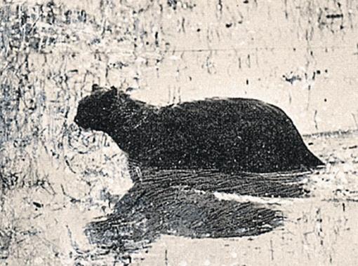 Перезимовавшая в лесу кошка.