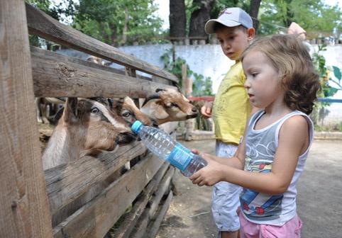 Дети поливают водой кур, а четвероногим дают напиться из бутылок. Фото Екатерина Бакурова