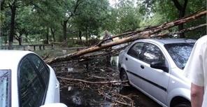 Несколько улиц засыпали упавшие деревья. Фото: 0629.com.ua