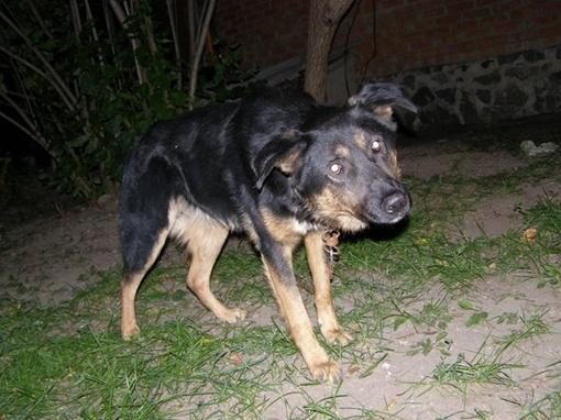 Хозяин к собаке так и не вернулся....Фото ЦЗЖП