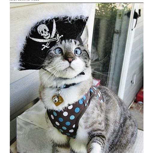 Очаровательный косоглазый кот стал настоящей интернет-сенсацией. Фото Facebook