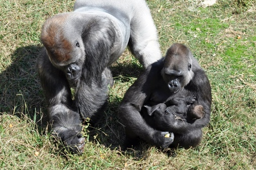 Малышку обожают местные жители, а в последнее время ее снимки облетели весь мир. Фото facebook.com