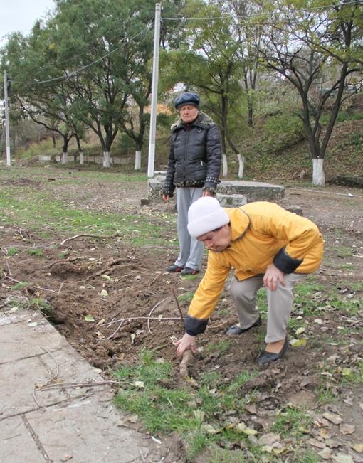 Местные жители насчитали пару десятков вырубленных деревьев. Фото: Геннадий Маковецкий