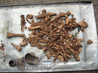 Вот из-за этой груды костей хозяева участка чуть не загремели в тюрьму. Фото: Леонид РЯБКОВ.