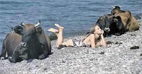 Немного напоминает кадр из фильма «Веселые ребята». Который, кстати, снимался в Крыму.