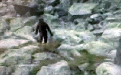 Существо ходило среди камней.