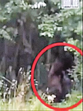 Кадр с мобильного телефона Тадеуша. Насмотревшись на прелести его молодой подруги, йети убежал в лес.