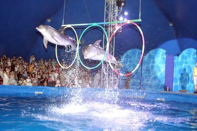 Дельфины парили над водой, как птицы