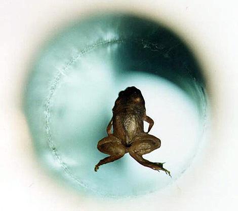До мышей - из живых существ - в магнитном поле летали только лягушки.