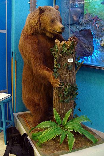 Посетителей встречает медведица Маша.