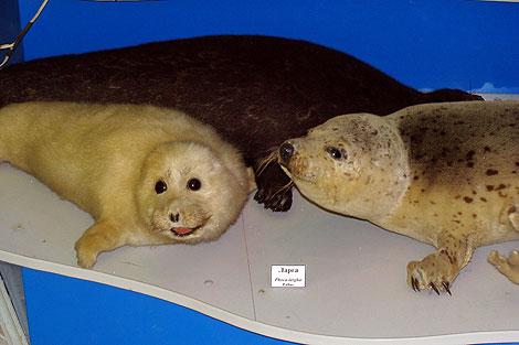 В зоомузее ТНУ более 3 700 экспонатов.