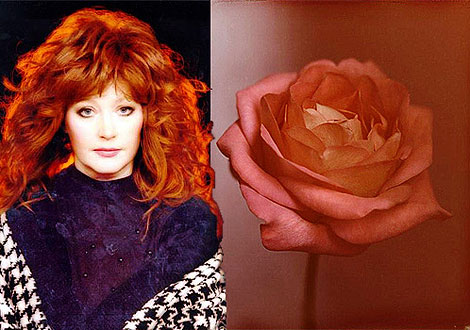 Примадонну фотограф увидел в образе розы. Фото: zvezdi.ru и Владимира ШИРОКОВА.