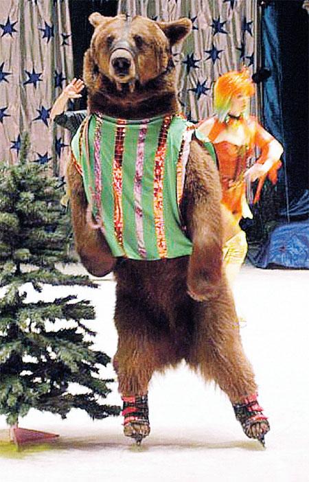 Мишку по кличке Сеня принесли в цирк егеря после того, как мать медвежонка убили браконьеры.