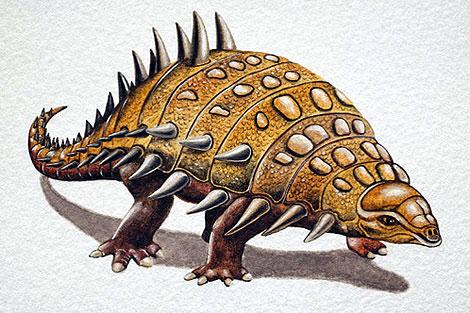 Так выглядел Ankylosauridae - динозавр той группы, к которой принадлежит Tatankacephalus cooneyorum.