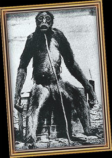 Обезьяна Лоя, убитая в Южной Америке. До этого ее тут считали «снежным человеком».