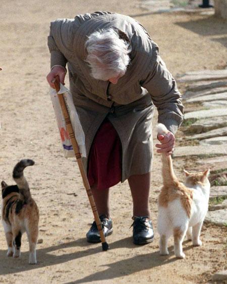 - Интересно, долго ли будут тянуть кота за хвост с этими льготами?