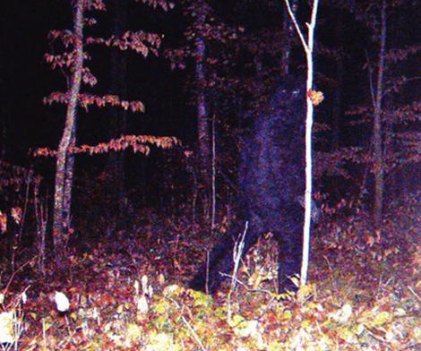 Снимок в Миннесоте автоматической камерой Тима Кедровски.