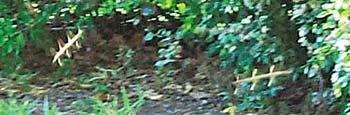 Над некоторыми лужайками «небесные рыбки» летают косяками. Что лишь подтверждает вывод исследователей: они - как правило, насекомые, которые предстают в таком экзотическом виде на снимках.