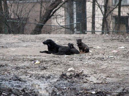 Возле места, где погиб Иван Волошин (на фото сверху), по-прежнему бродят бездомные псы.