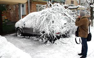 Ночью порывы ветра поломали полторы сотни деревьев, немало из них «приземлились» прямо на припаркованные авто.