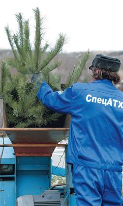 Зачем бросаться елками с балкона - из них же и после Нового года может получиться уйма полезных вещей!