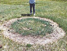 США, штат Нью-Мексико, 29 мая 2009 года. Странный круг, появившийся в 23 метрах от останков забитого животного.