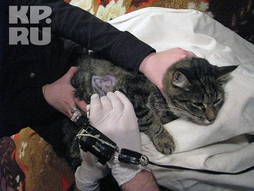 Мода делать татуировки на домашних животных перекочевала в Россию из Бельгии. Фото: Александр ЧЕРНОВ