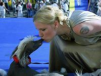 Валерия не устает эпатировать публику. Например, появляясь всюду с любимой китайской хохлатой собачкой Моней. Фото: Владимир ВЕЛЕНГУРИН.