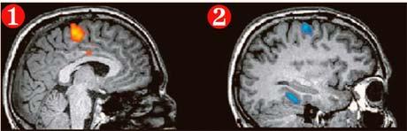 1. Мозговая активность, соответствующая ответу «да», - человек представляет, что играет в теннис. 2. Мозговая активность, соответствующая ответу «нет», -человек представляет, что ходит по дому.
