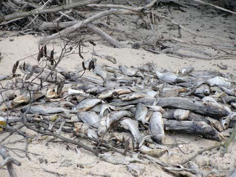 Чтобы в Киевском море вновь было изобилие рыбы, нужно 5 лет запрета на промышленный лов.