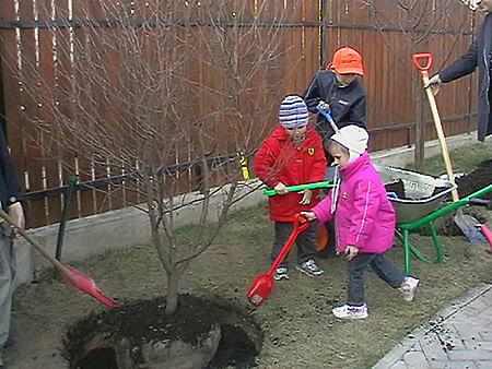 Трехлетняя Арина посадила в честь крестной тети «дерево Толкуновой». Фото: Наталья МУРГА.